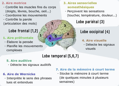 La technique djelking les augmentations du membre
